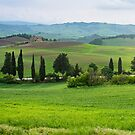Green countryside of Val d'Orcia, Tuscany, Italy by revealedrome
