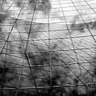 Gridwork B&W by PPPhotoArt