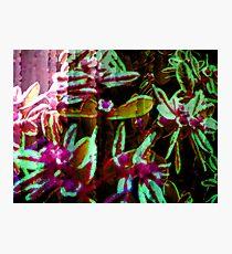 Fantasy & Flowers. Photographic Print