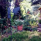 Garten im Juni von Gourmetkater