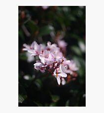 passionately pink Photographic Print