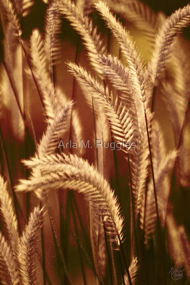 Wild Harvest by Arla M. Ruggles
