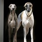 My Wonderful Whippets  by whippeteer