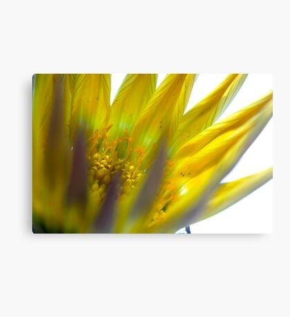 exploding flower Canvas Print