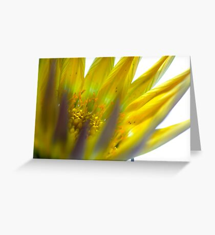 exploding flower Greeting Card