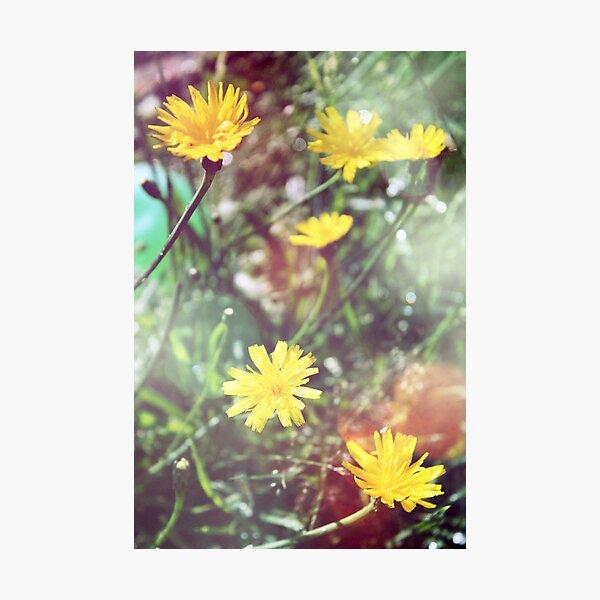 Enchantment - Lucid Dandelion Dreams Photographic Print