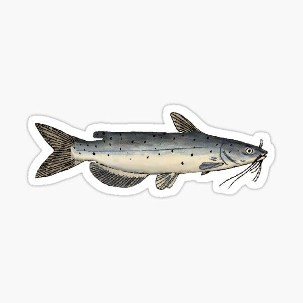 Channel Catfish (Juvenile) Sticker
