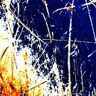 firestorm by Lynne Prestebak