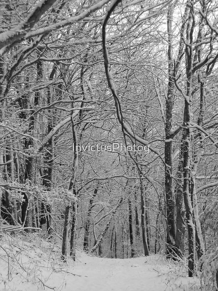 Quiet Walk by InvictusPhotog
