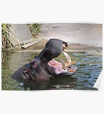 Hippo loves its carrots Poster