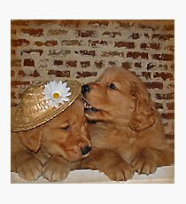 Goofy Goldens Photographic Print