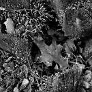 Hollowed Log by InvictusPhotog