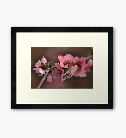 Pink with a Golden Touch Framed Print