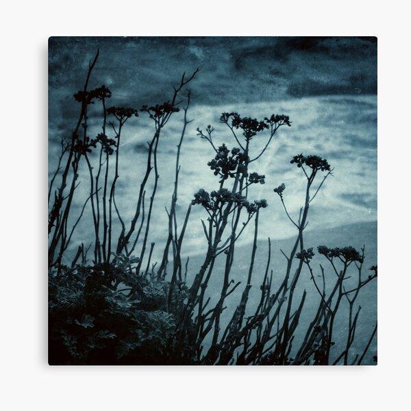 Midnight Dreams of the Sea Canvas Print