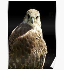 Bird of Prey #1 Poster