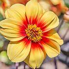 Sommerblume von Dave Hare