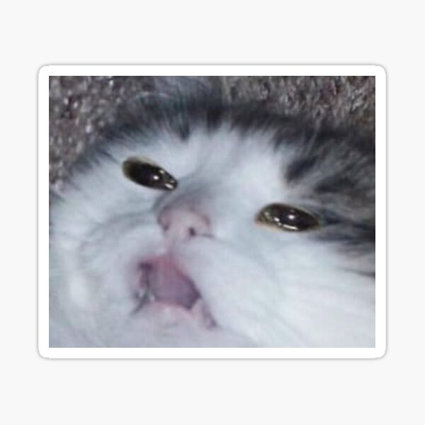 crying cat  Sticker