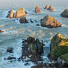 Setting sun illuminates boulders and waves of Nugget Point by Sergey Orlov
