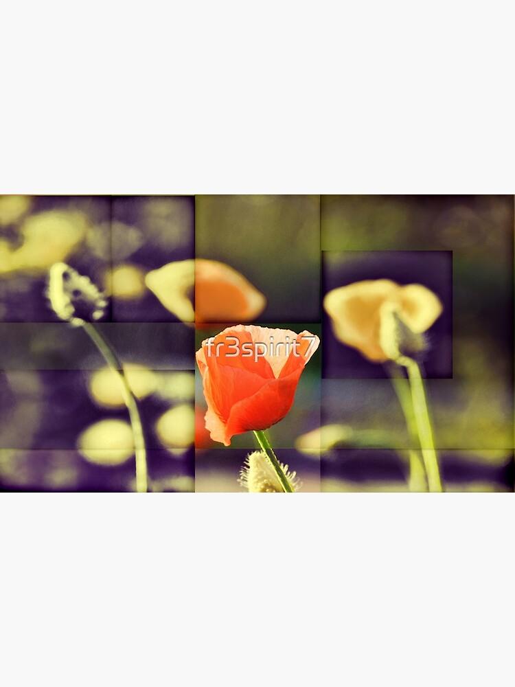 California Poppy(2) by fr3spirit7
