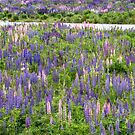 Colourful green pasture with blue lupines at the Eglinton River Valley by Sergey Orlov