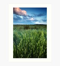Blakeney Grass Art Print