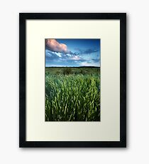 Blakeney Grass Framed Print
