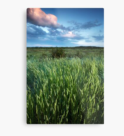 Blakeney Grass Metal Print