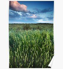Blakeney Grass Poster