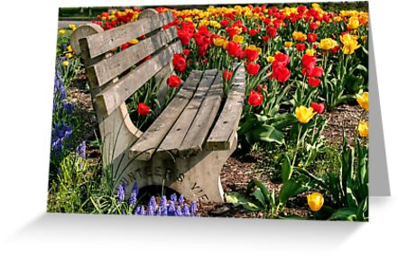 Abducted Park Bench by Gene Walls