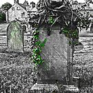 Ivy Attack. Graveyard, St Mary's, Kirkby Lonsdale, Cumbria, England. by David Dutton