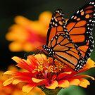 Flutter By. by spiffyriki