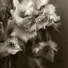 Sepia Gladioli by Ann Garrett