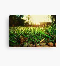 Grass Realm Canvas Print