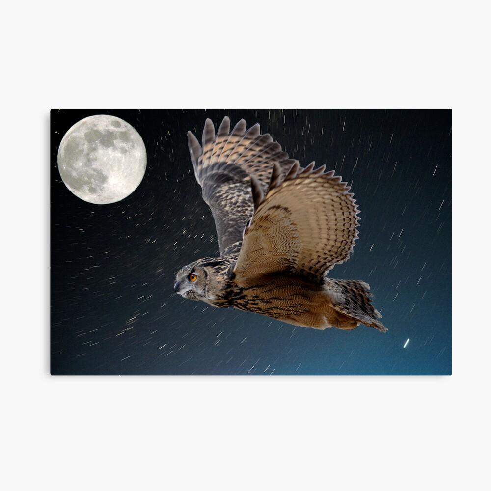 Eagle owl and the stars Canvas Print
