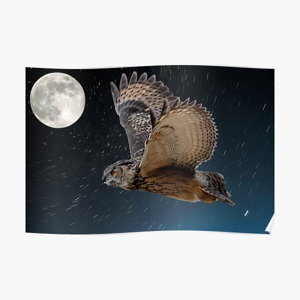 Eagle owl and the stars Poster