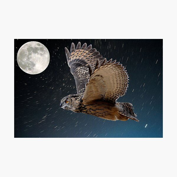 Eagle owl and the stars Photographic Print
