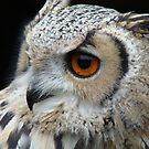 eagle owl sideways glance by purpleminx