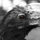 hornbill close-up by purpleminx