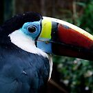 red billed toucan by purpleminx