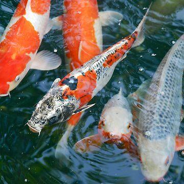 nishikigoi  [japanese carp] by Caprice