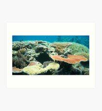 Flynn Reef, Cairns QLD Art Print