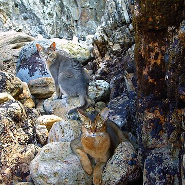 Cats on Rocks Two  by zavi