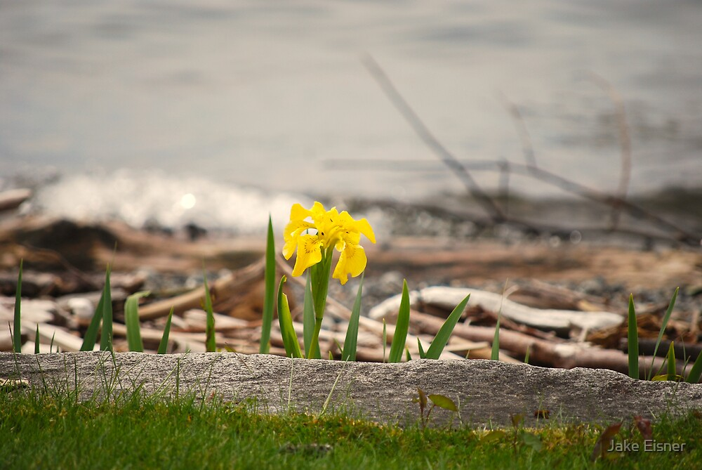 A Spring Day by Jake Eisner