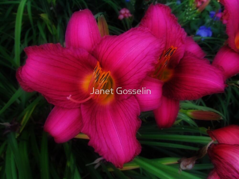 Daylilies by Janet Gosselin