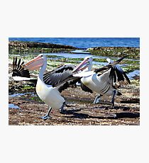 Pelican Chase Photographic Print