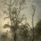 Misty Morn by amko