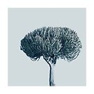 Monochrome - Candelabra tree by VrijFormaat