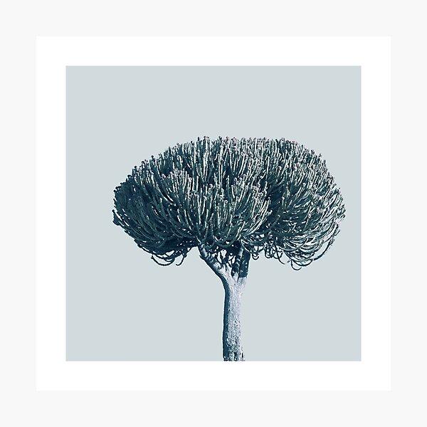 Monochrome - Candelabra tree Photographic Print