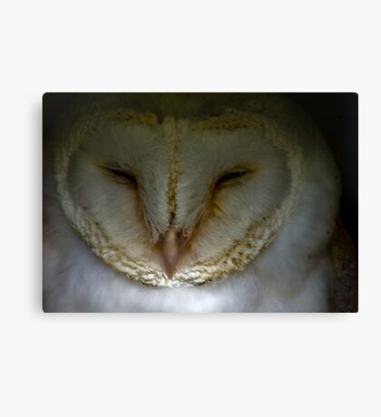 Barn Owl #1 Canvas Print