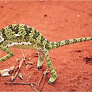 """TRAP SUUTJIES""!....(Verkleurmannetjie)FLAP-NECK CAMELEON  – Chameleon dilepts by Magriet Meintjes"